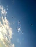 Vögel im Himmel Lizenzfreie Stockfotos