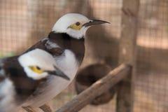 Vögel im Käfig stockfoto