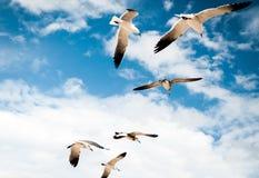 Vögel im Paradies Stockbild