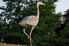 Vögel im Park des Regenten - 2 Lizenzfreies Stockbild