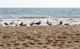 Vögel im Sand des Strandes Stockbilder