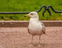 Vögel im Stadtplatz Lizenzfreie Stockbilder