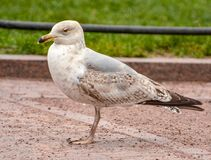 Vögel im Stadtplatz Stockbilder