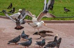 Vögel im Stadtplatz Stockfoto