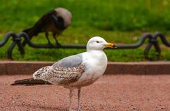 Vögel im Stadtplatz Lizenzfreies Stockbild
