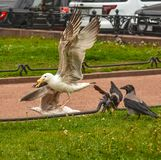 Vögel im Stadtplatz Lizenzfreie Stockfotos