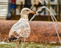 Vögel im Stadtplatz Stockbild