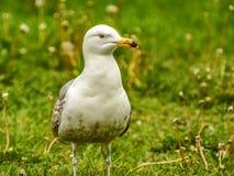 Vögel im Stadtplatz Lizenzfreie Stockfotografie