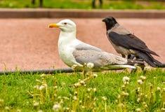 Vögel im Stadtplatz Stockfotos