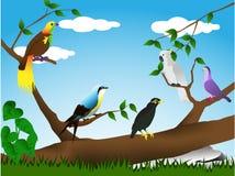 Vögel im wilden Stockbild
