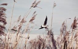 Vögel im Wind Stockbild
