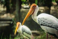 Vögel im Zoo Lizenzfreie Stockfotografie