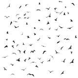 Vögel, Möven, schwarzes Schattenbild auf weißem Hintergrund Vektor Lizenzfreie Stockfotos