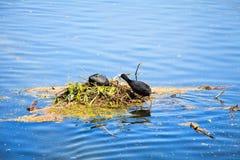 Vögel machen Haus auf dem See in St. James Park in London Lizenzfreie Stockfotos
