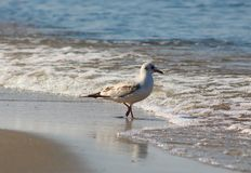 Vögel morgens stockfotos