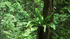 Vögel nisten Farn in einem Regenwald an Nationalpark Springbrook stock footage