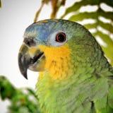 Vögel, populär bekannt als Vögel oder Vögel Stockfotos