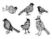 Vögel, Schattenbildvögel, dekorative Vögel, sechs Vögel, Isolat, Vektorillustration Stockfoto