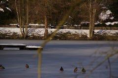 Vögel, Schnee und See - Frankreich Stockfoto