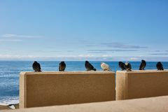 Vögel sind durch das Meer kalt tauben lizenzfreies stockbild