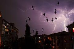 Vögel sind schneller als Blitz in einem Gewitterhimmel Lizenzfreie Stockfotografie