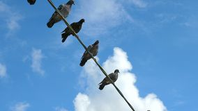 Vögel sitzen auf dem Draht stock video