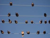Vögel sitzen auf Drähten Stockbilder