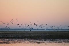 Vögel am Sonnenaufgang Stockbilder