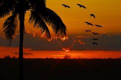 Vögel am Sonnenuntergang stockfoto