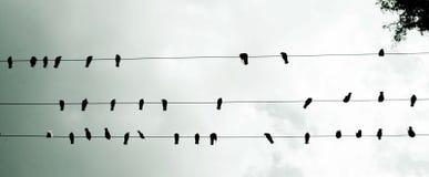 Vögel stillgestanden auf Stromleitungen, Ansicht von unten lizenzfreies stockfoto
