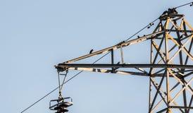 Vögel Storn Sturnus gemein Lizenzfreie Stockfotografie