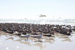 Vögel am Strand Lizenzfreies Stockbild