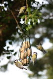 Vögel um eine Zufuhr Lizenzfreie Stockfotos