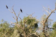 Vögel und Bäume stockfotografie