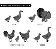 Vögel und Kinder Lizenzfreie Stockfotografie