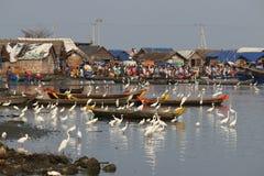 Vögel und Menschen im Fischereihafen stockbilder