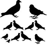 Vögel und Natur Lizenzfreie Abbildung