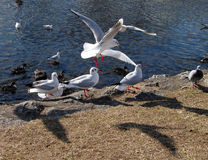 Vögel und Schatten lizenzfreies stockbild