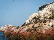 Vögel und Seelöwen Ballestas Lizenzfreie Stockbilder