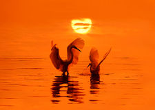 Vögel und Sonne Lizenzfreies Stockfoto