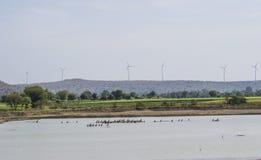 Vögel und Sumpfgebiet lizenzfreie stockfotos