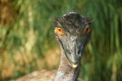 Vögel unserer Welt Stockfotografie