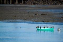 Vögel versammeln sich auf einem Kanu stockfoto