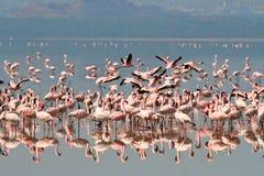Vögel von Tansania Stockbild
