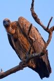 Vögel von Tanzania Lizenzfreie Stockfotografie