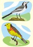 Vögel weißer Wagtail und yellowhammer Stockfoto