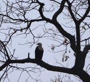 Vögel in Wildpark Simbabwes Mana Pools stockfoto