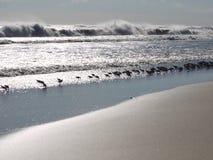 Vögel zeichnen das Ufer am Rand der Wellen Lizenzfreie Stockfotografie
