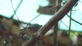 Vögel am Zoo stock video