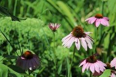 Völlig blühende Blumen stockfoto